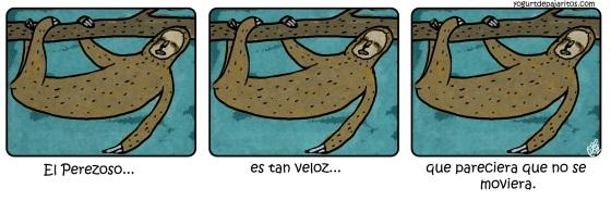 Velocidad